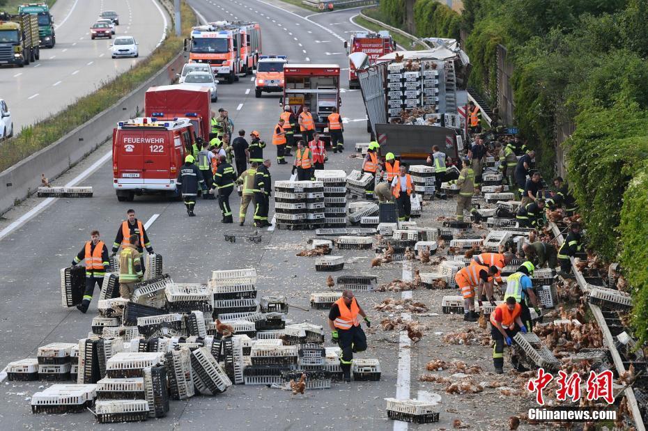 """奥地利一卡车发生意外 7000只鸡""""霸占""""道路"""