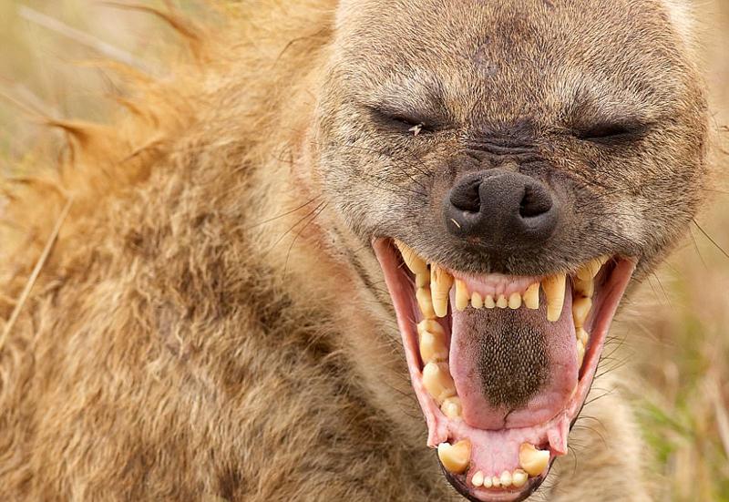 超近距离拍摄世界最恐怖动物