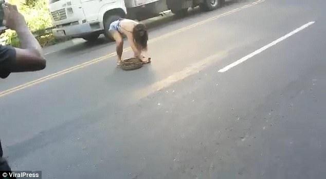 巴西1蟒蛇躺路中间堵塞交通被女汉子徒手捉走