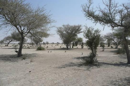 气候变迁非洲沙漠恐变绿 风暴与水灾风险或增高