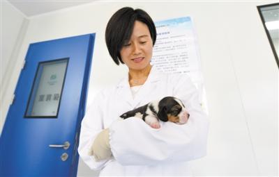 中国成功培育世界首例基因编辑克隆犬