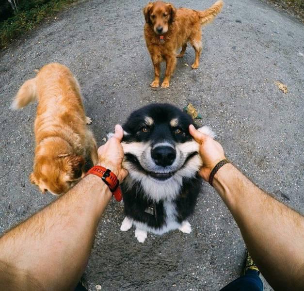 动物的世界是很欢乐的