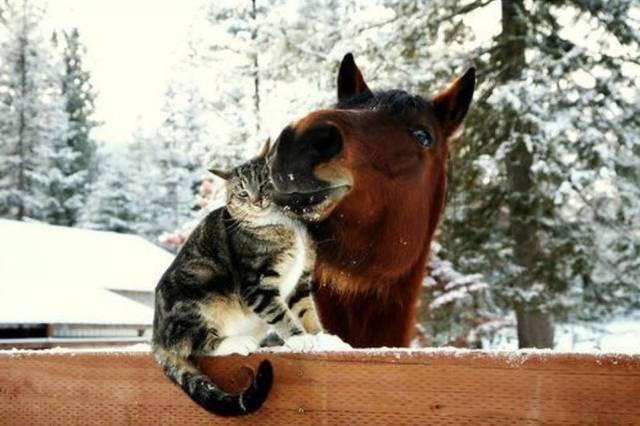 动物的世界是很欢乐的图片