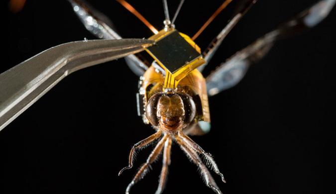 """蜻蜓变身可操控微型无人机 动物""""强化""""引争议"""