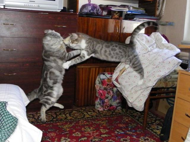 动物们,起来一起嗨图片