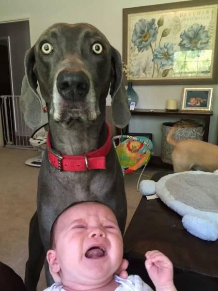 看!表情帝的生活是这样子的图片