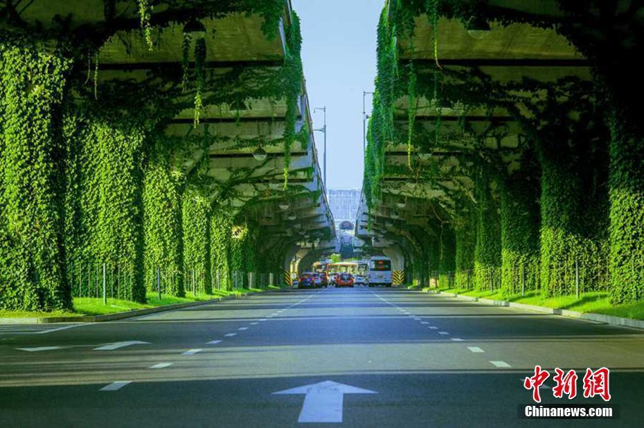 http://himg2.huanqiu.com/attachment2010/2017/0712/20170712064923240.jpg
