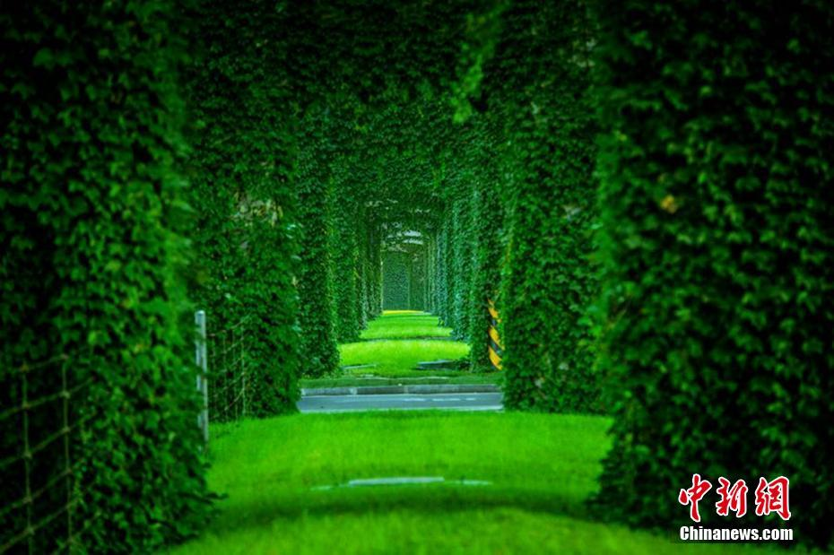 http://himg2.huanqiu.com/attachment2010/2017/0712/20170712064923674.jpg