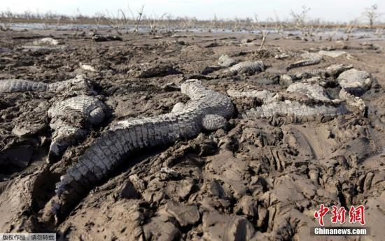 """地球步入第六次""""生态大灭绝"""":速度超出预期"""