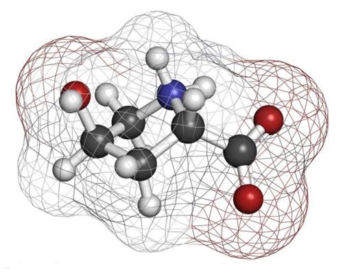 胶原蛋白占皮肤真皮层的80%,它在皮肤中构成了一张细密的弹力网