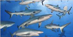 无知孩童海中冲浪遇400条鲨鱼