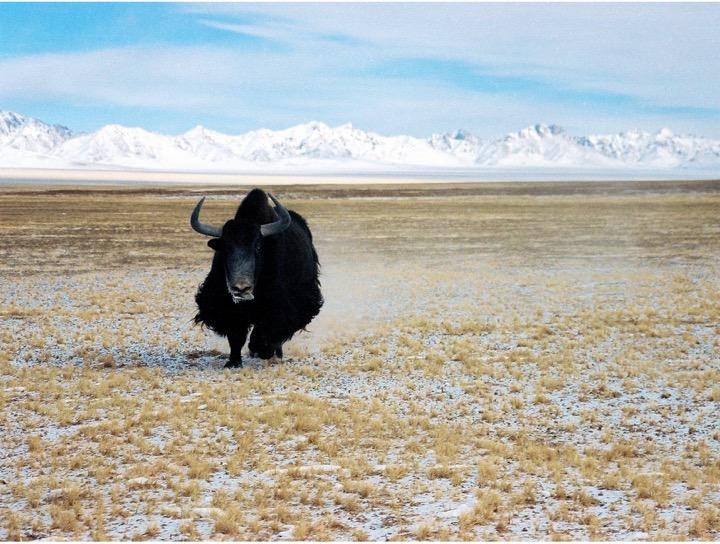 一汽-大众助力青藏驿站 探索保护高原脆弱生态新方法