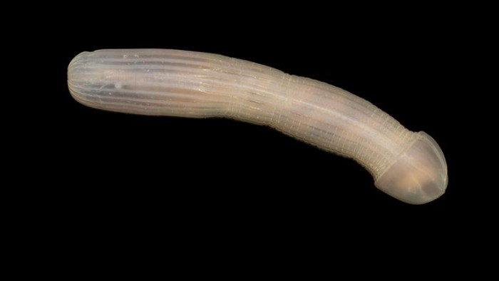 研究人员在澳大利亚深渊带发现数百种全新的物种