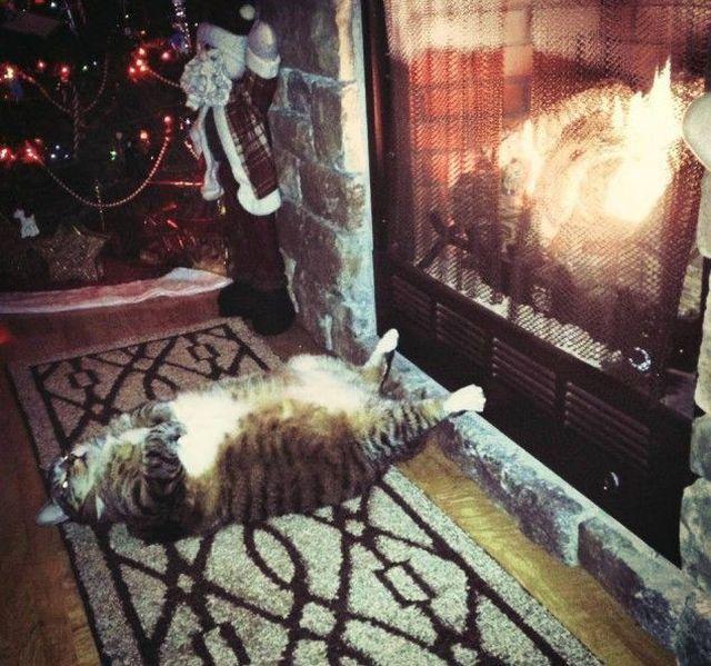 动物睡觉的时候蠢蠢哒图片