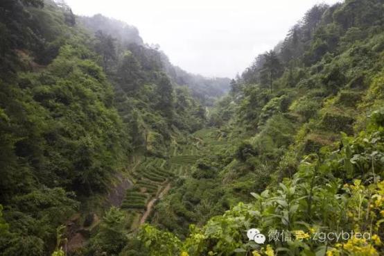 从10天的准备看武夷岩茶制作技艺出类拔萃的四大面