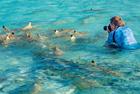 摄影师在鲨鱼群淡定拍照
