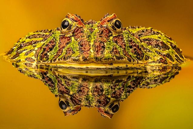 国际野生生物摄影大赛展多彩动物世界