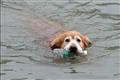 苏州有只环保狗