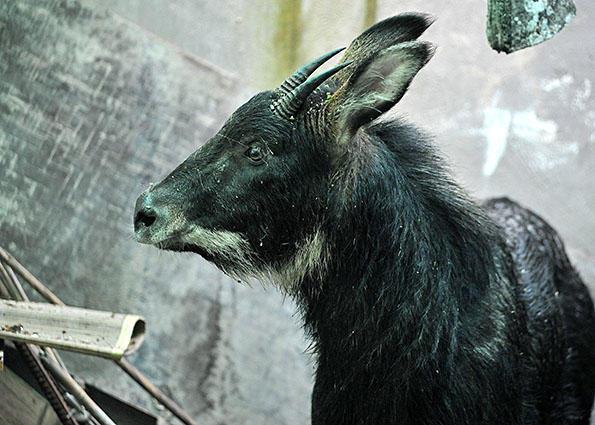 福建3人捡到淹死国家野生保护动物 卖给他人被判刑