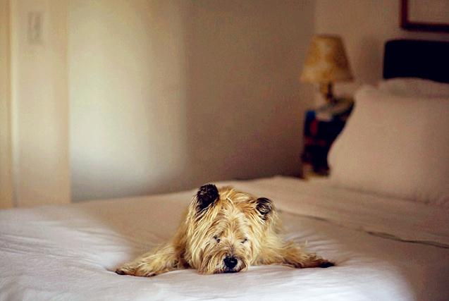 动容!美摄影师镜头记录狗狗暮年百态