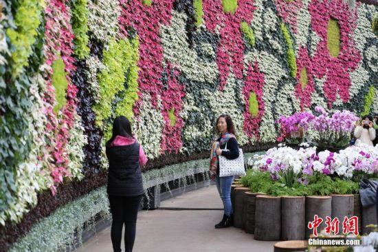 悉尼展出南半球最大的室内花墙