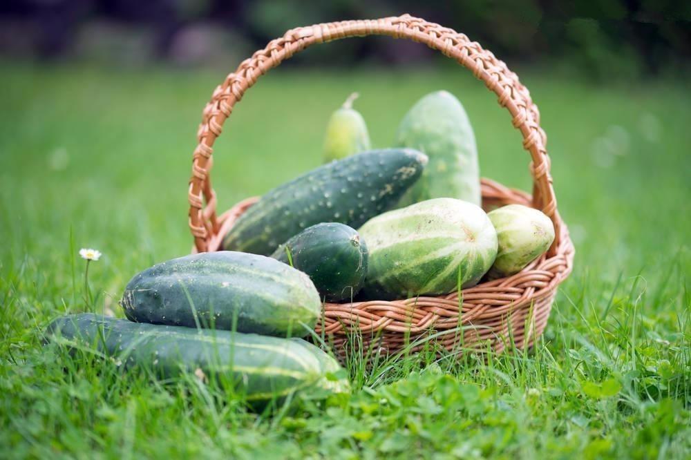 6种瓜是夏天的最佳搭配!吃瓜套路居然这么深