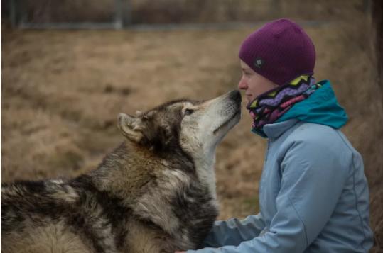 为什么狗狗爱人类?遗传学家试图寻找DNA线索