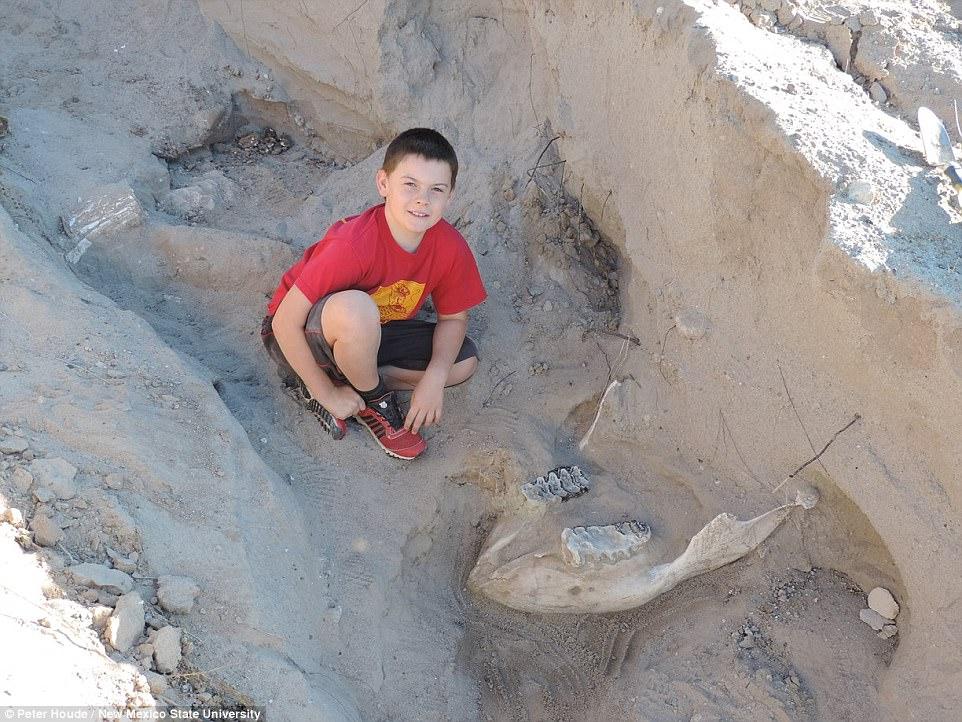 """当时裘德和家人在新墨西哥的沙漠徒步旅行,不小心被一块骨头绊倒。男孩告诉媒体:""""我跑得越来越远,被一个牙齿形状的物体绊倒。当时我的脸摔在下颚旁边,我看到更远处还有另一个象牙""""。在刚发现的时候,男孩和他的家人都没有认出化石。男孩说:""""我不知道这是什么,但我觉得这很不寻常""""。"""