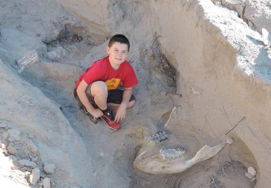 """美10岁男孩一跤""""摔出""""120万年前剑乳齿象化石"""