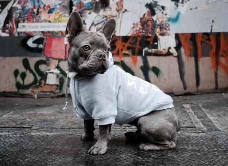 狗狗穿的玩的太高级