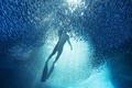 海洋深处的震撼力 汤加海底绝美大片
