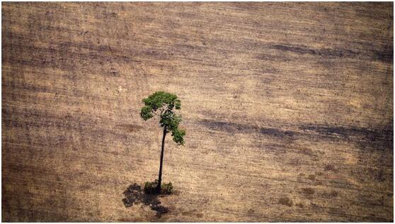 法媒分析森林沙漠化:农业开发是森林消失主因