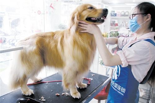 王思聪的宠物狗有多红?同名淘宝店年入千万元