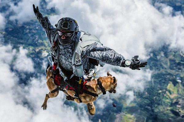 跳伞犬从4300米高空飞降而下