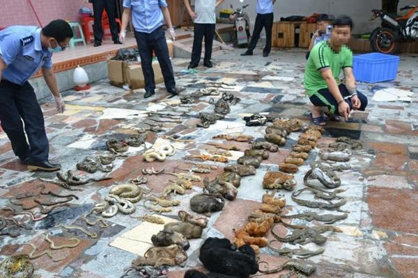 广东警方专项行动收缴万余野生动物