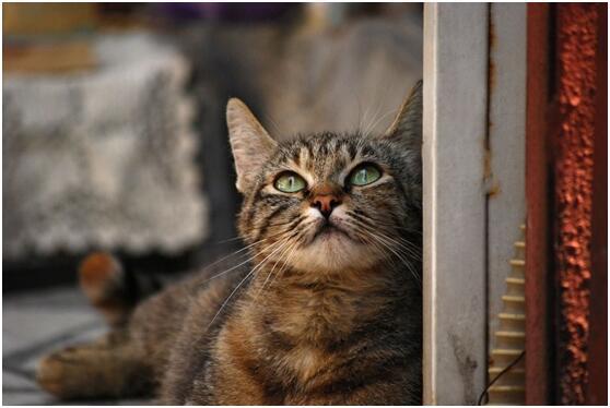 全球首例!日本出现被猫咬伤感染蚊虫病死亡案例