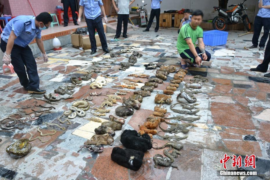 广东警方收缴万余野生动物