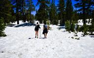 北半球的清凉七月 穿短裤去滑雪