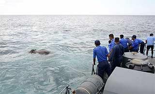 斯里兰卡海军大海中捞出大象