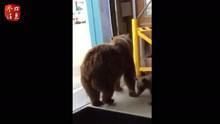 三头灰熊大摇大摆进仓库觅食 机智小哥怪叫驱赶
