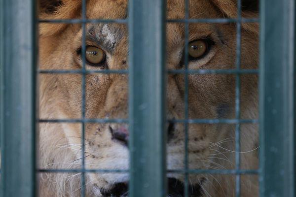 """叙利亚动物园因战火遭弃 土耳其接收""""动物难民"""""""
