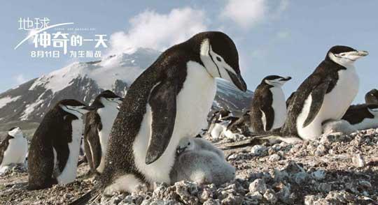 企鹅鲸的手工制作图片