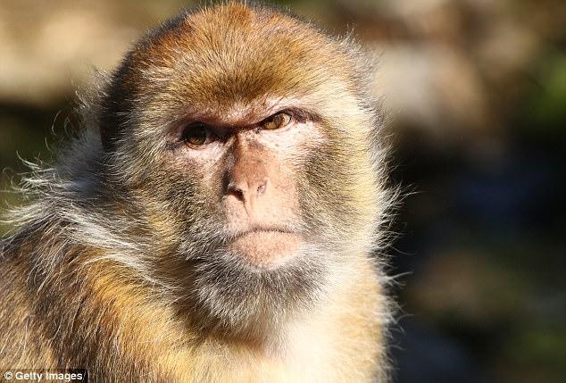 研究:人类可通过声音频率判断所有陆生动物情