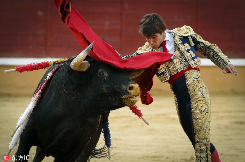 西班牙举行精彩斗牛大会引人入胜