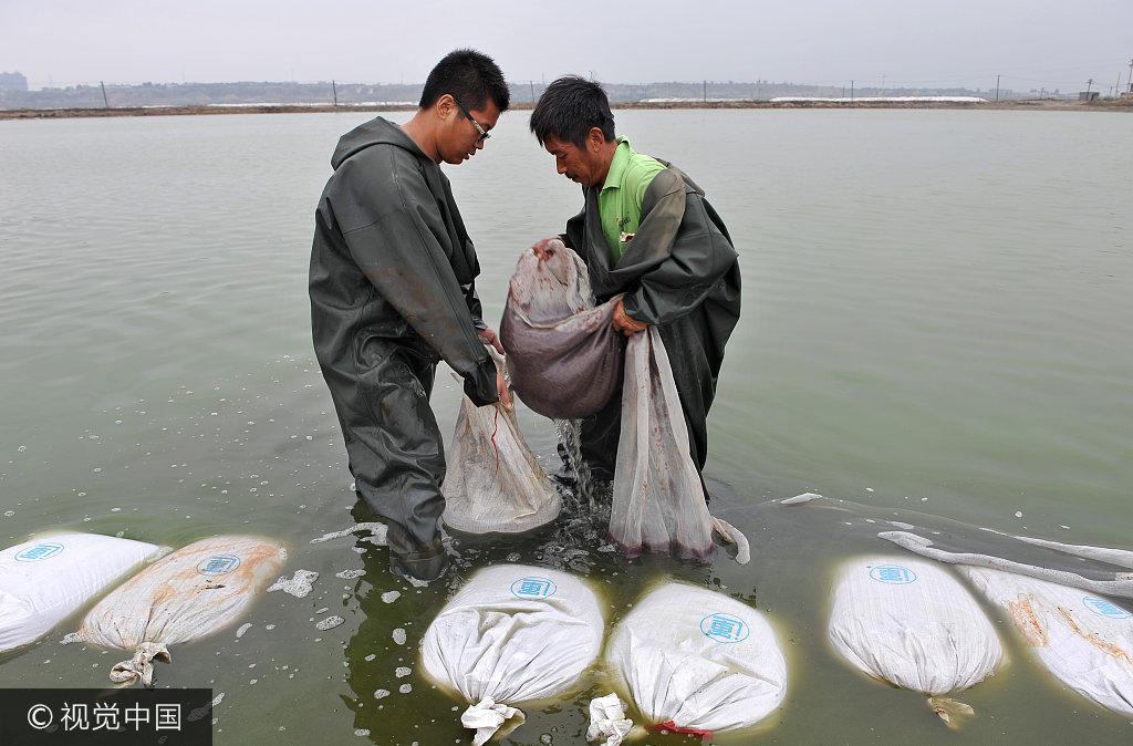 http://himg2.huanqiu.com/attachment2010/2017/0731/20170731065529558.jpg