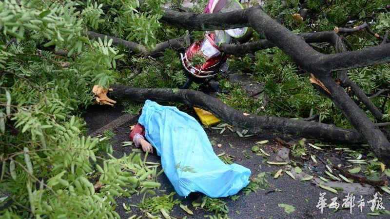 妈妈被狂风吹断的大树砸中离世 儿子捐出母亲眼角膜