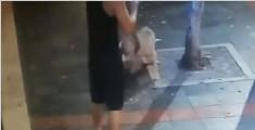 男子命令烈性犬街头咬死家猫