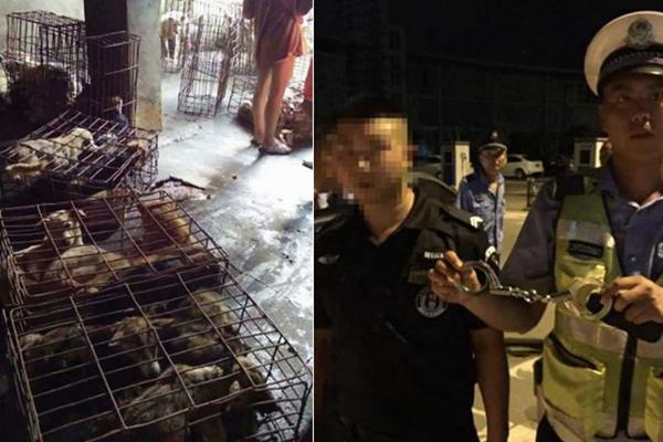为救108只狗 假警察开假警车被真警察抓