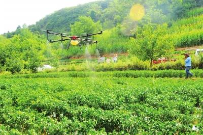 无人机喷洒抗旱农药