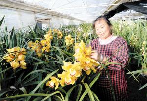 云南省花卉示范园区上半年引进内资5.89亿元